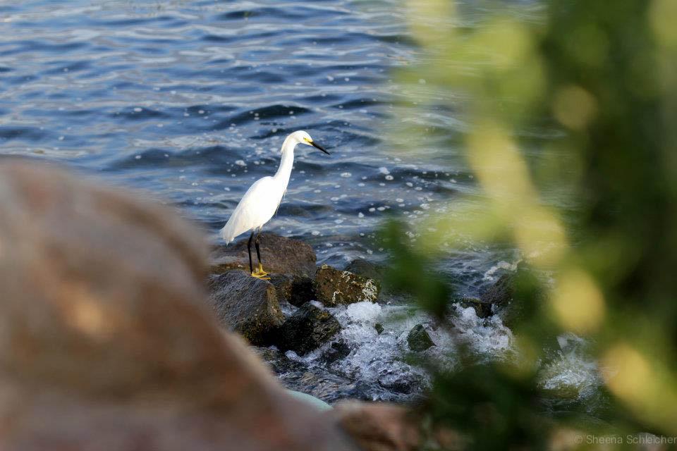 carlsbad-lagoon-wild-life.jpg