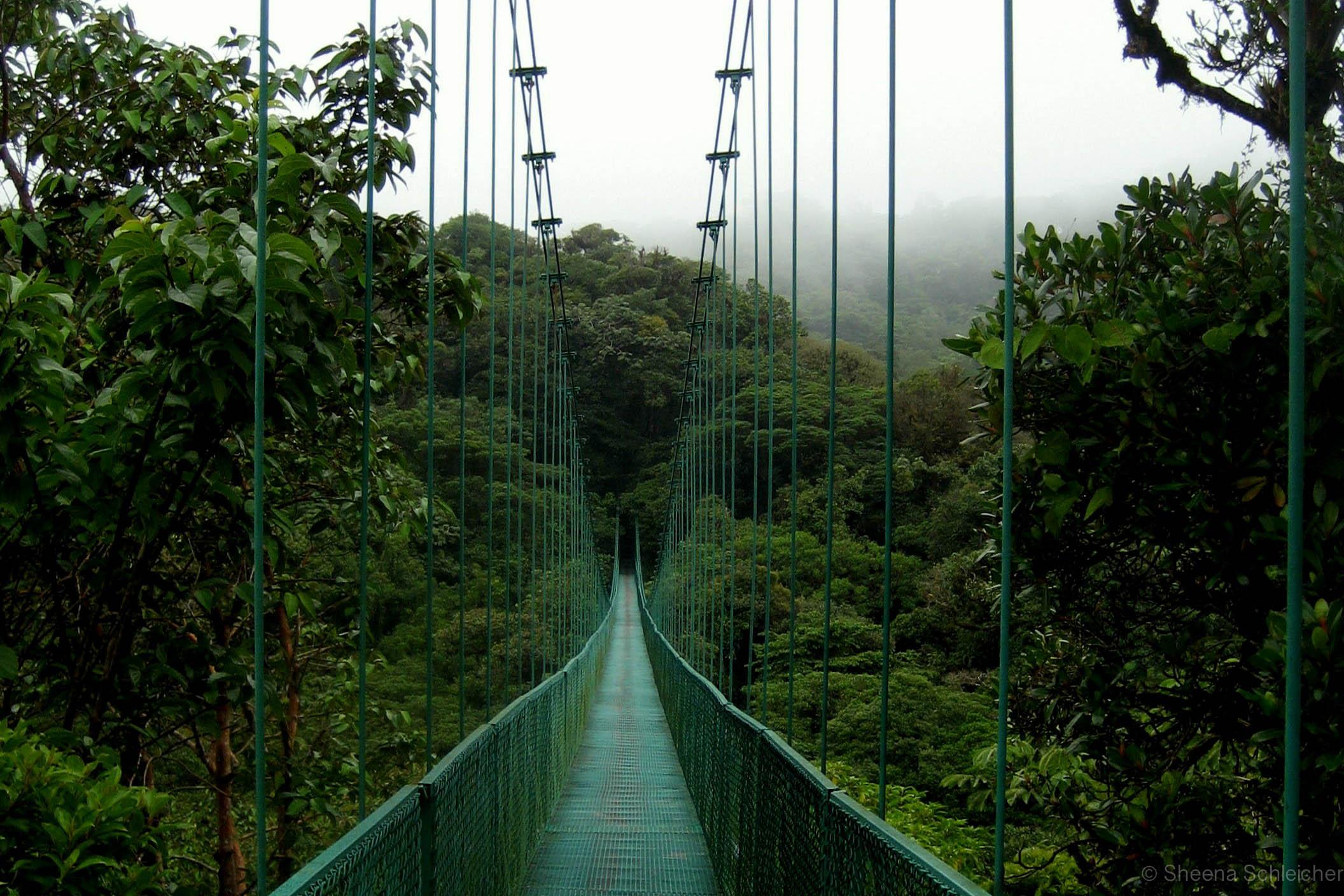 costa-rica-cloud-forest-bridge.jpg