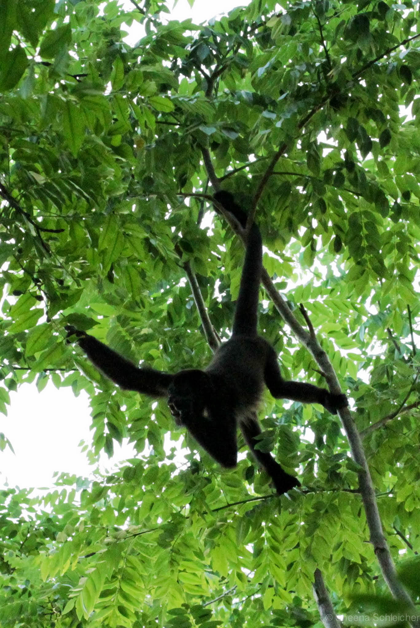 costa-rica-monkeys.jpg
