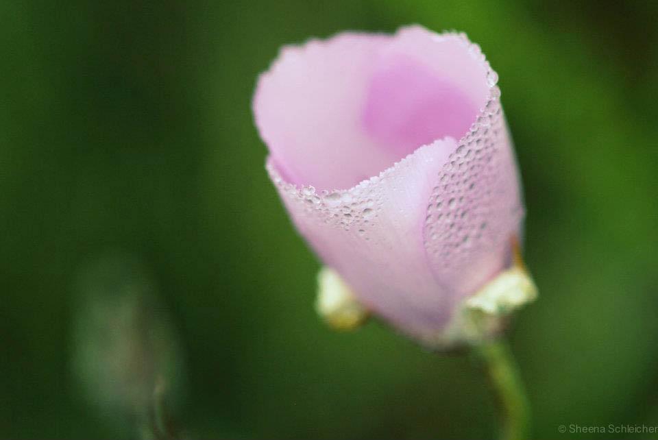 macro-flower-morning-dew.jpg