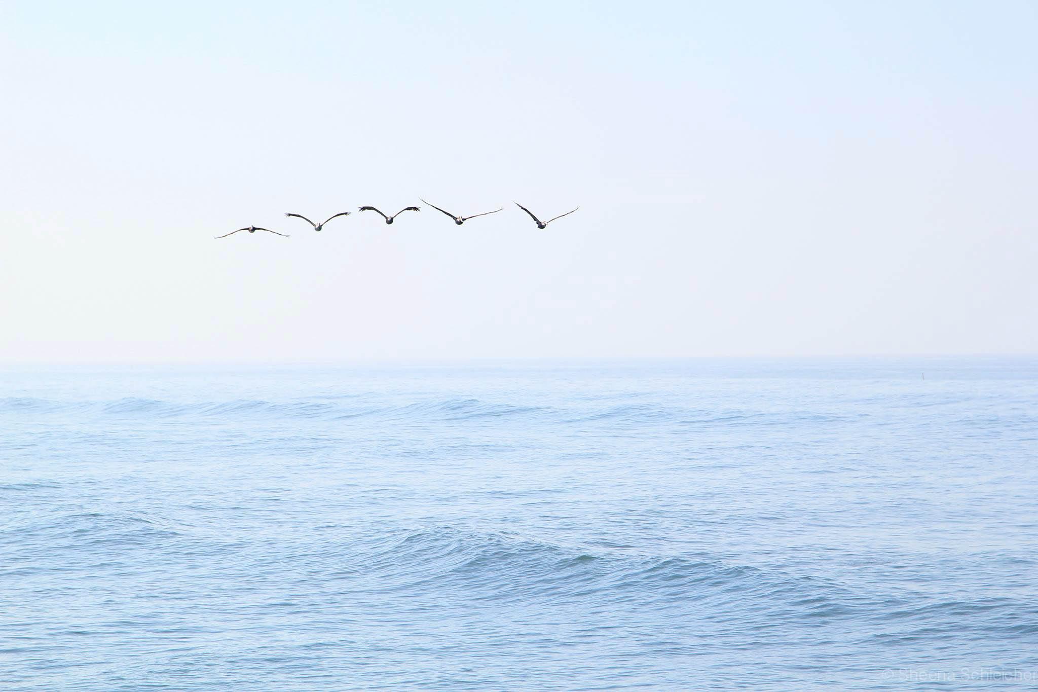 oceanside-surf-birds.jpg