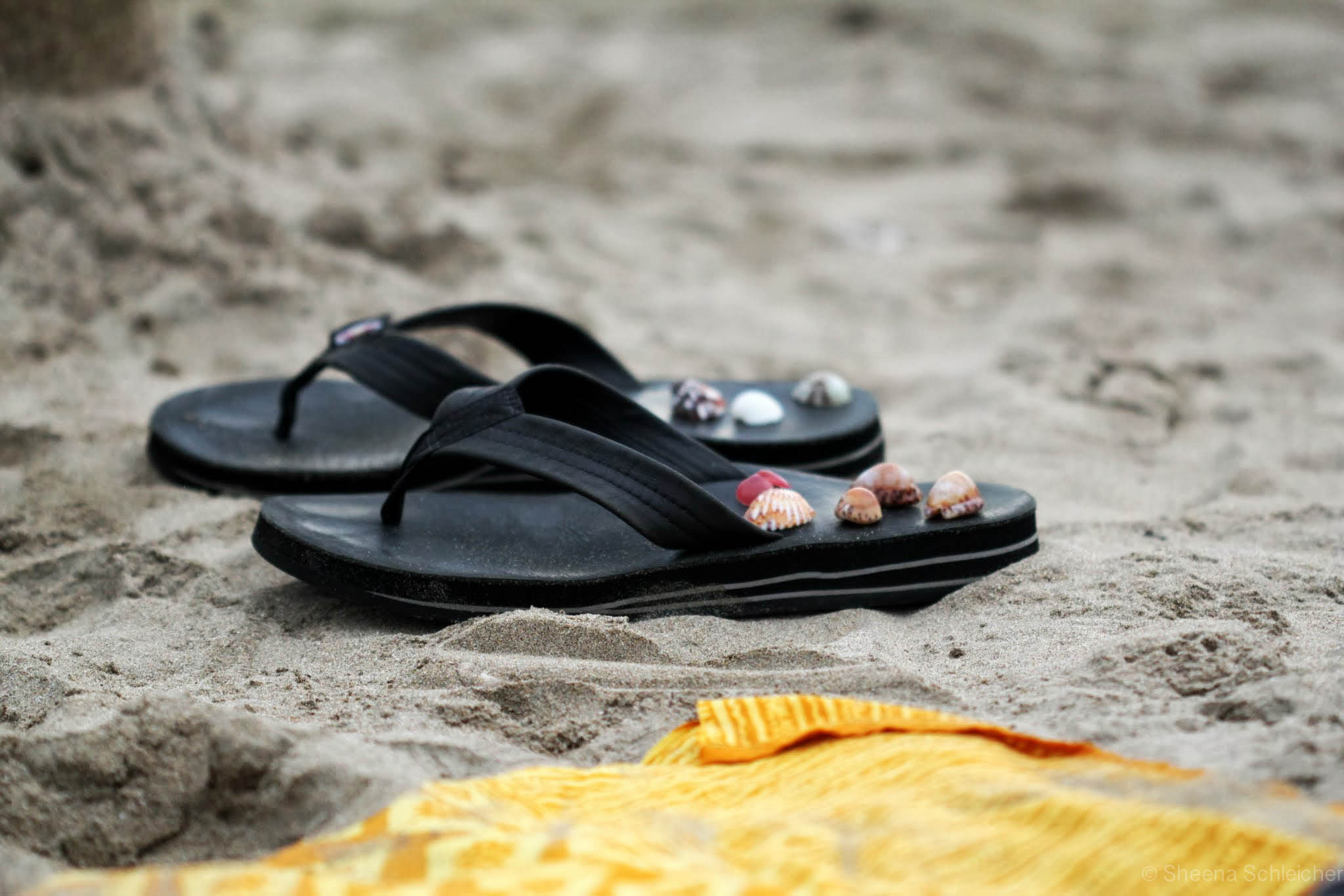 playa-grande-costa-rica-seashells.jpg