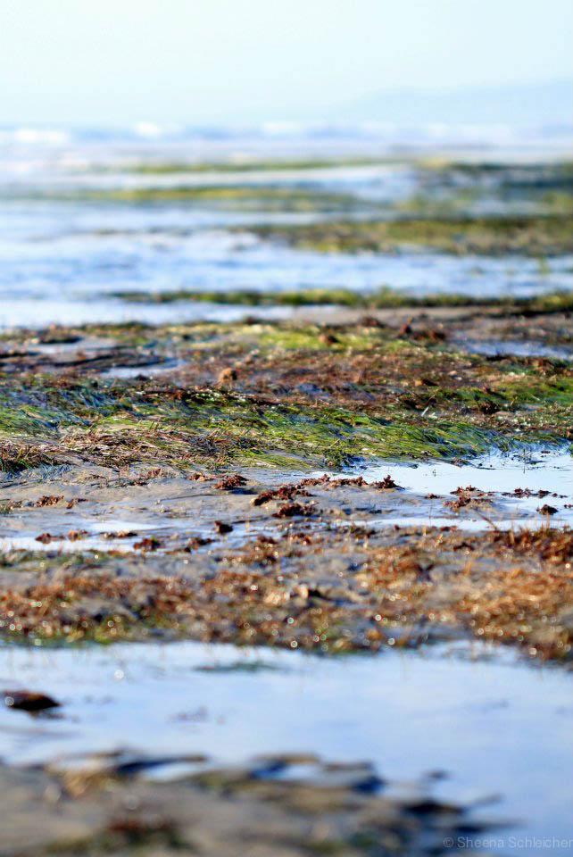 terra-mar-low-tide.jpg