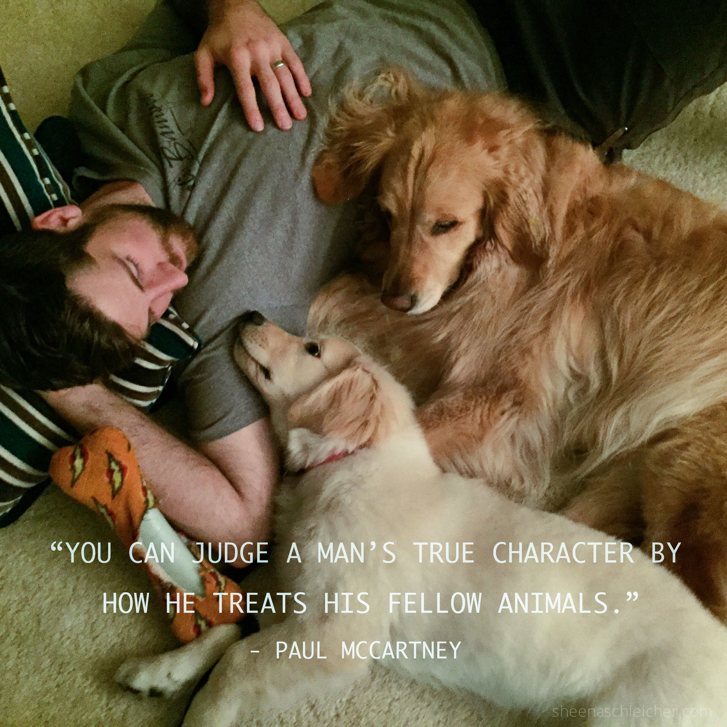 Man's best friend #dog #puppy #character #quote