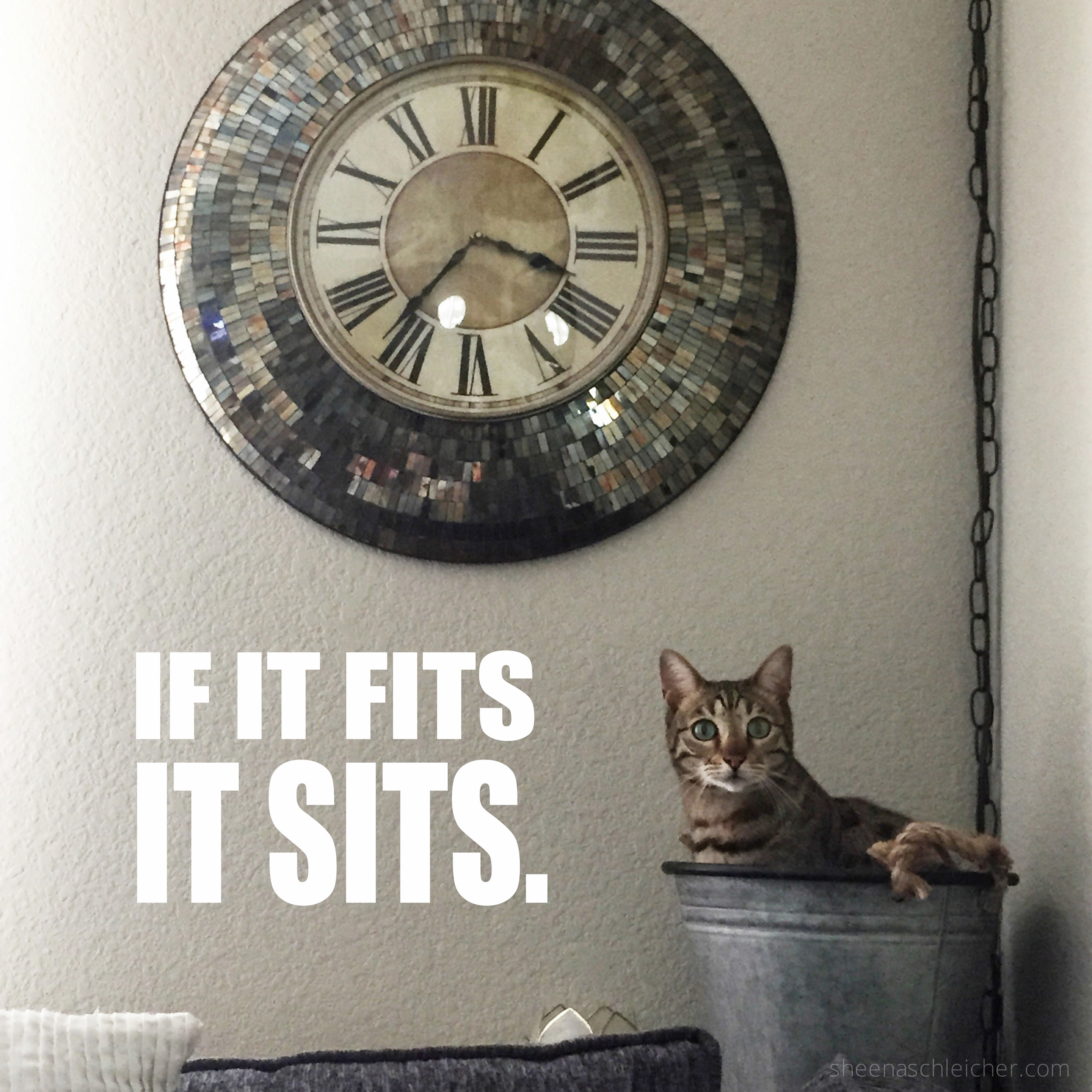 If it fits it sits! #cat #meme