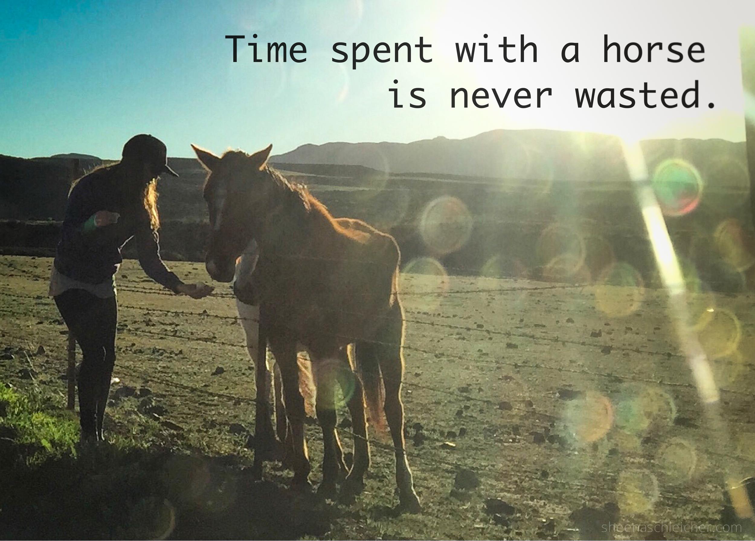 Wild horse quote. #horses #life