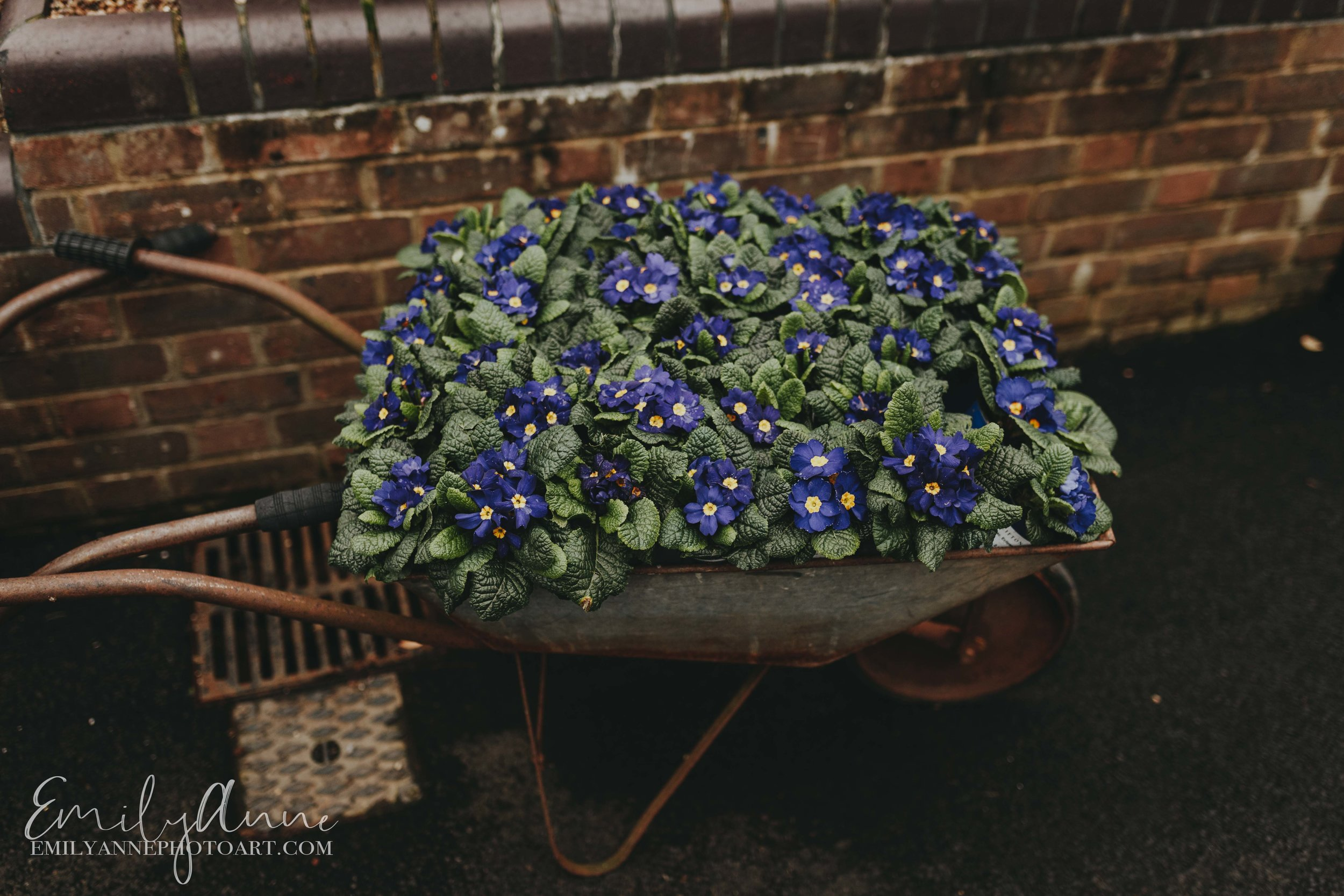 picture of gorgeous flowers in wheelbarrow inspired Peter rabbit photoshoot