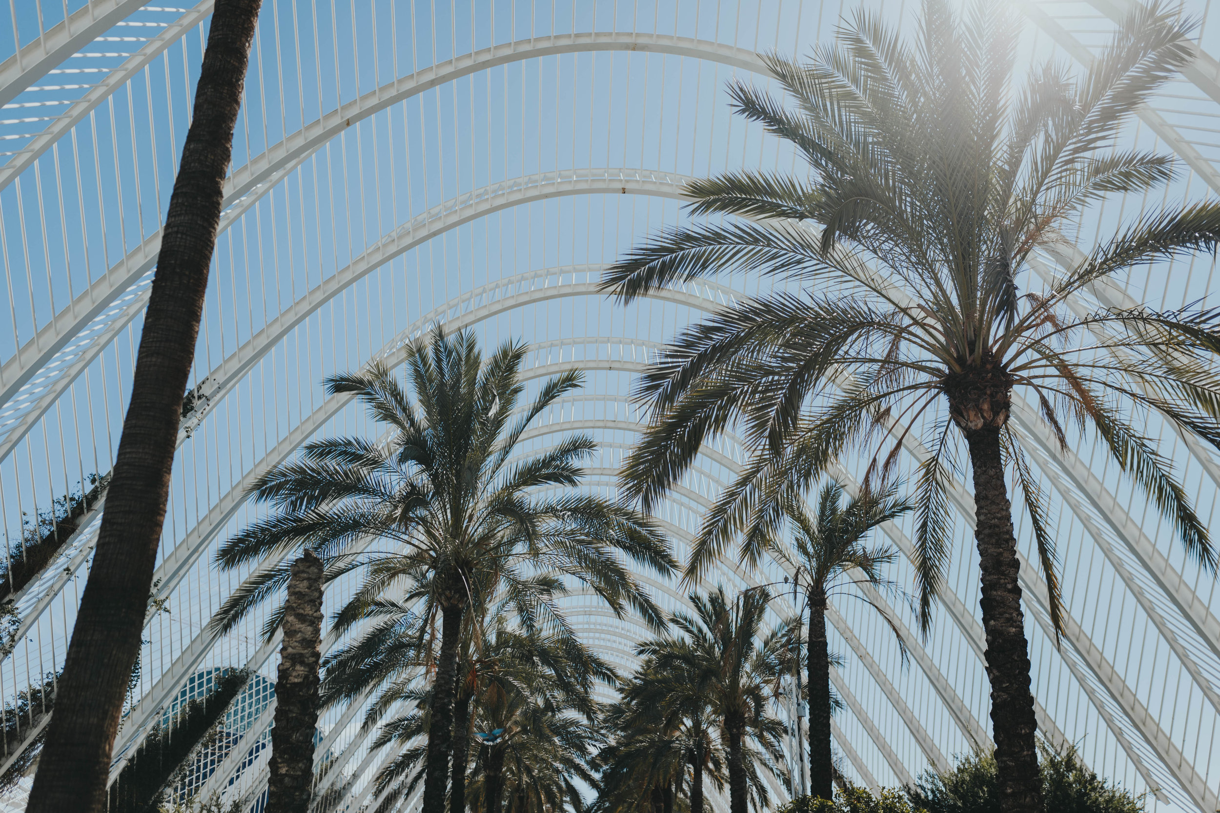 beautiful palm trees in Valencia Spain