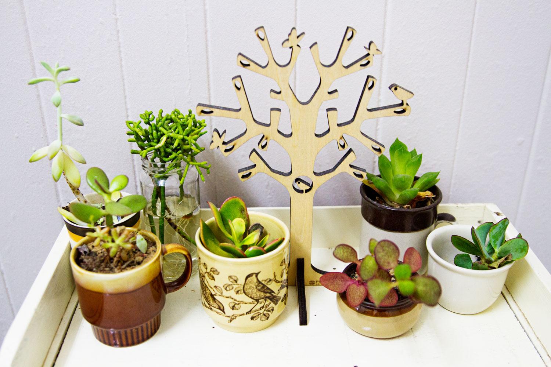Teacup cactus plants on top of a vintage bookshelf. bella magazine