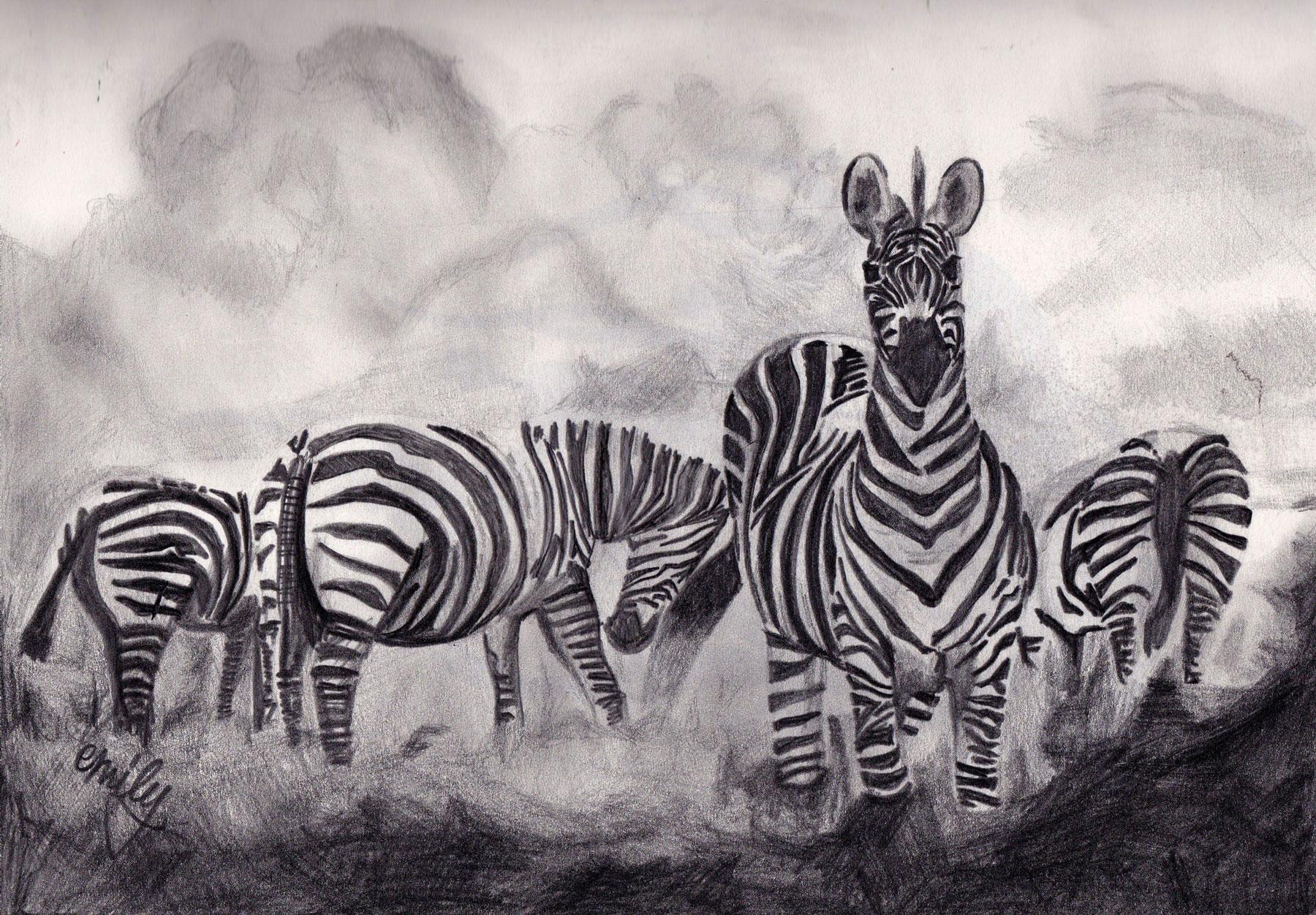 Illustration of Zebras by Emily McCubben