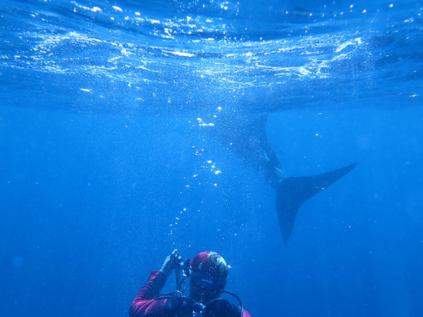 Whale Shark_2015_5.jpg