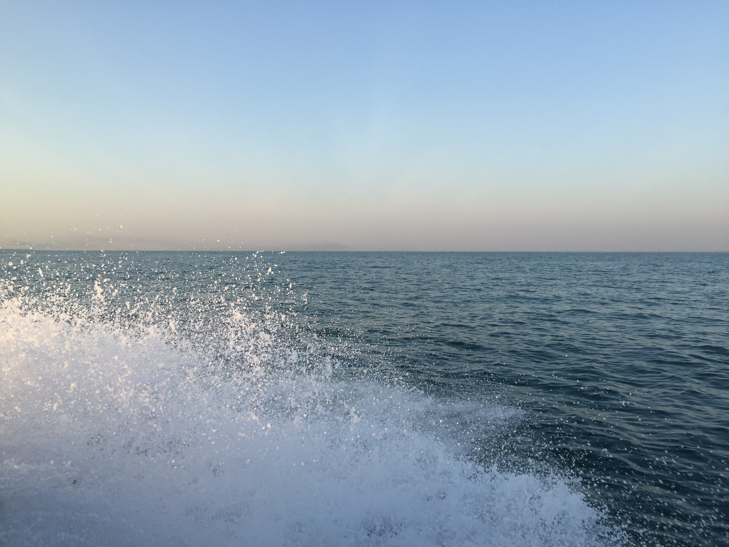 Whale Shark_2015_9.jpg