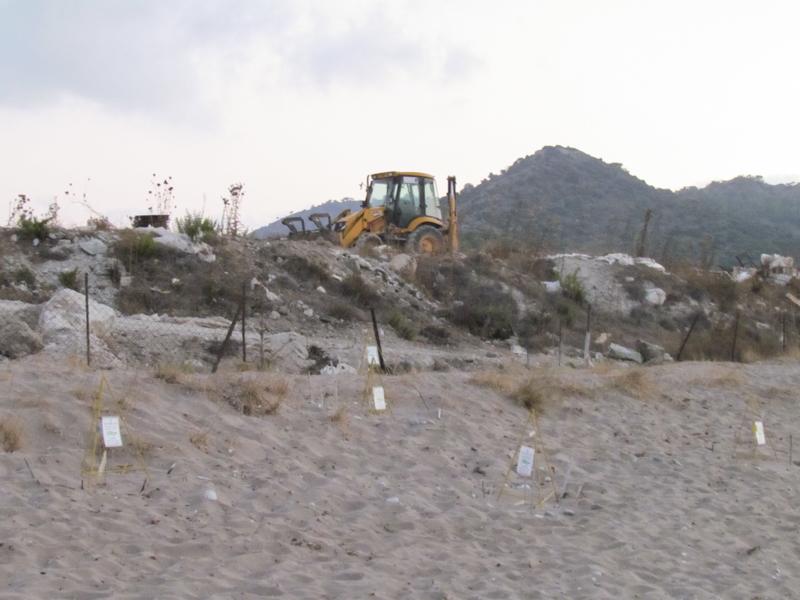 Bulldozers on protected turtle nests at Güelyalı (Vasilia) beach.
