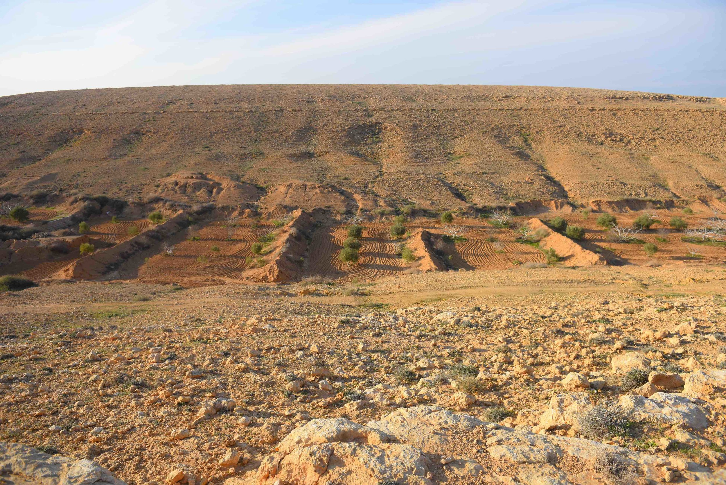 Kharoba Valley, showing the simultaneous and multiple techniques that Bedouin farmers use to collect water
