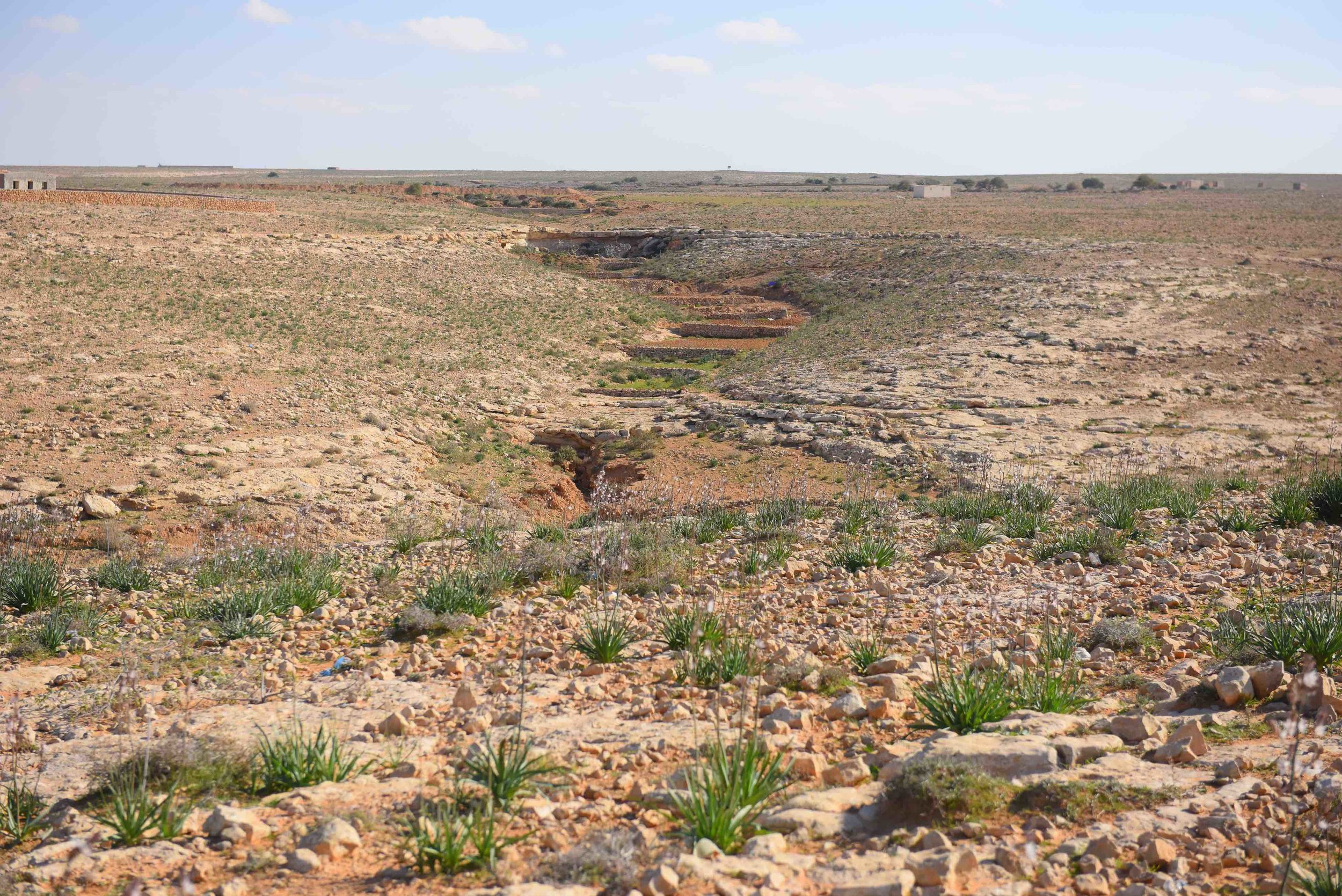 Landscape which shows multiple wadi catchment structures for slowing down surface water