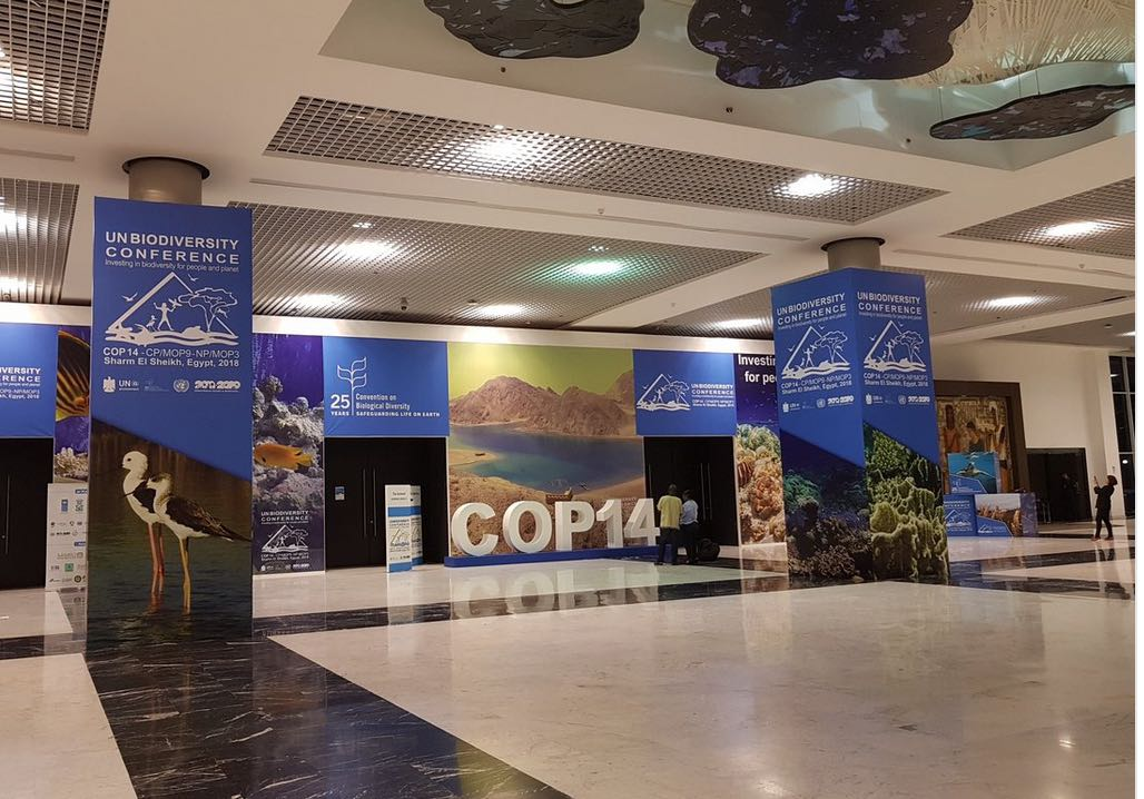from.cop14.jpg