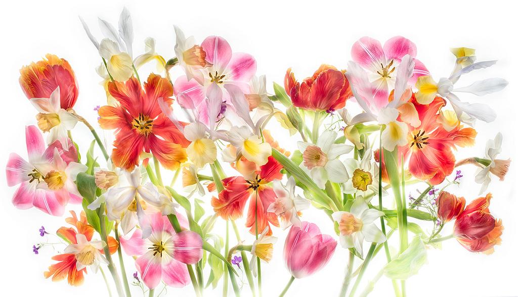 Harold Davis -Flowers of Springs Desires.jpg
