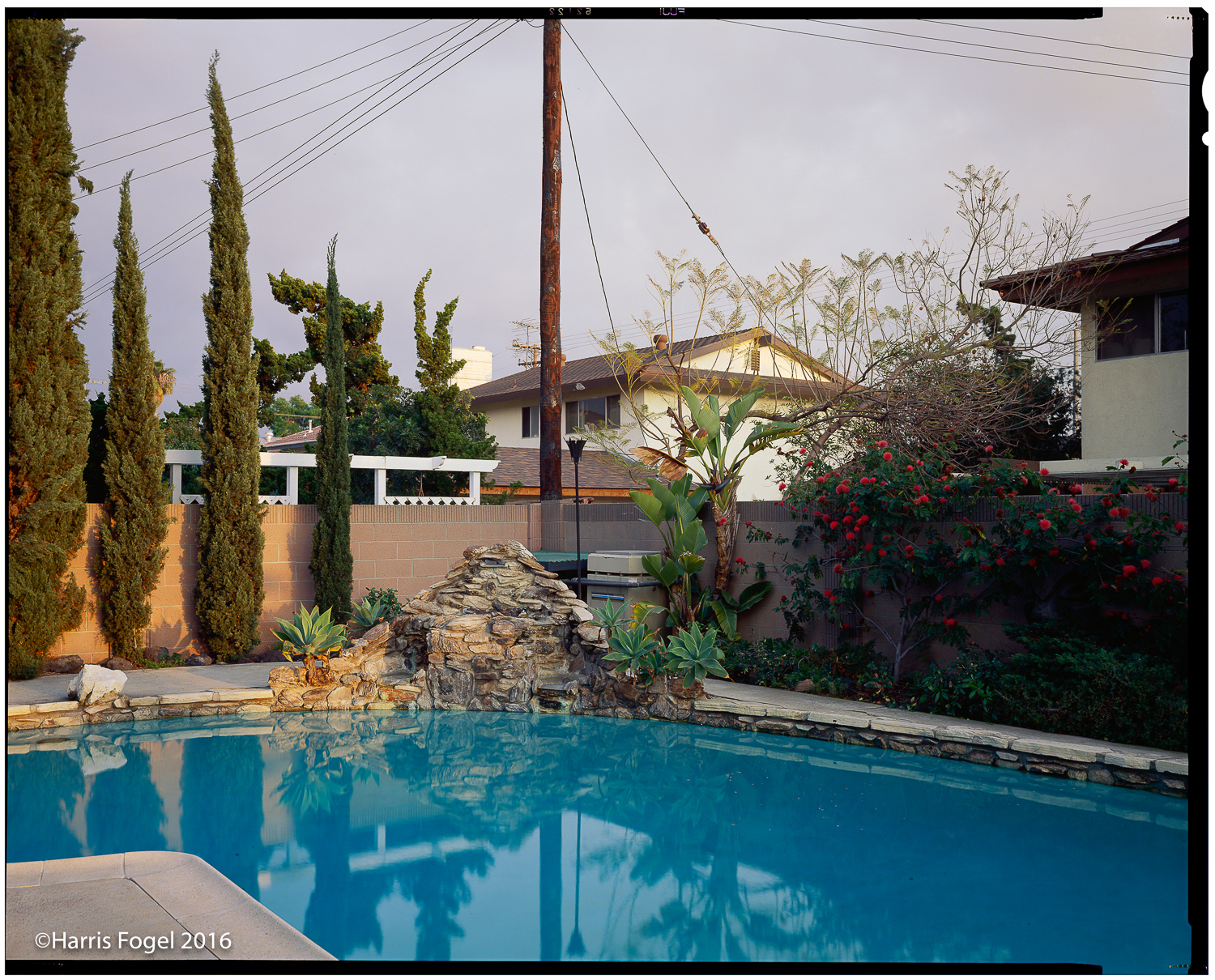 Hfogel_QA16_Anaheim_Backyard.jpg
