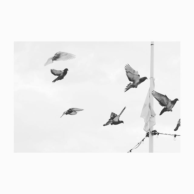 #freezingamomentintime  I love how pressing the capture button on my camera freezes a single moment in time. #bestill #beingfullypresent #mindfulness #thesepigeonswillneverbethesame #pigeonsofinstagram #instablackandwhite #blackandwhite #fujifilmxt2
