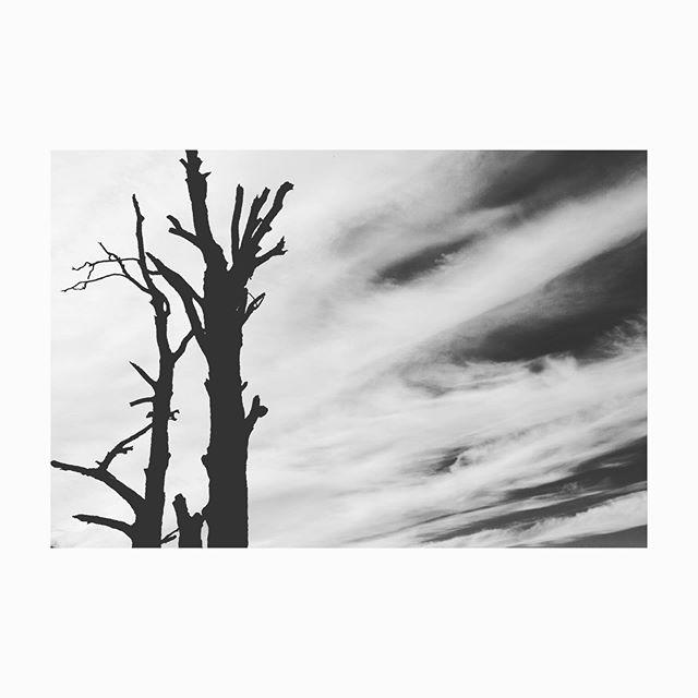 #treesofinstagram  #beingfullypresent  #blackandwhite  #fujifilmxt2 #fujifilm