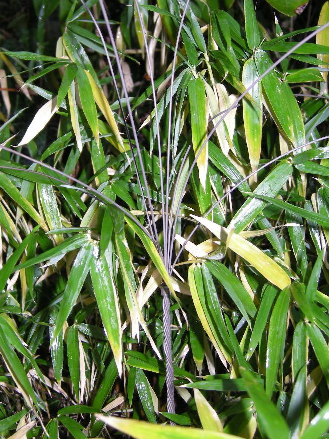 eletric-grass