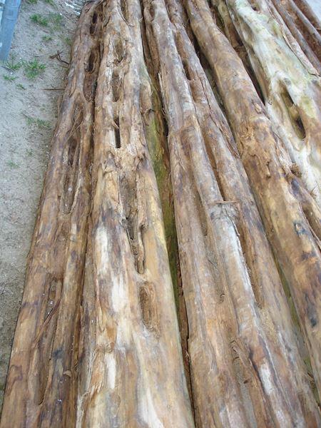 acaraqua-unusual-timbers