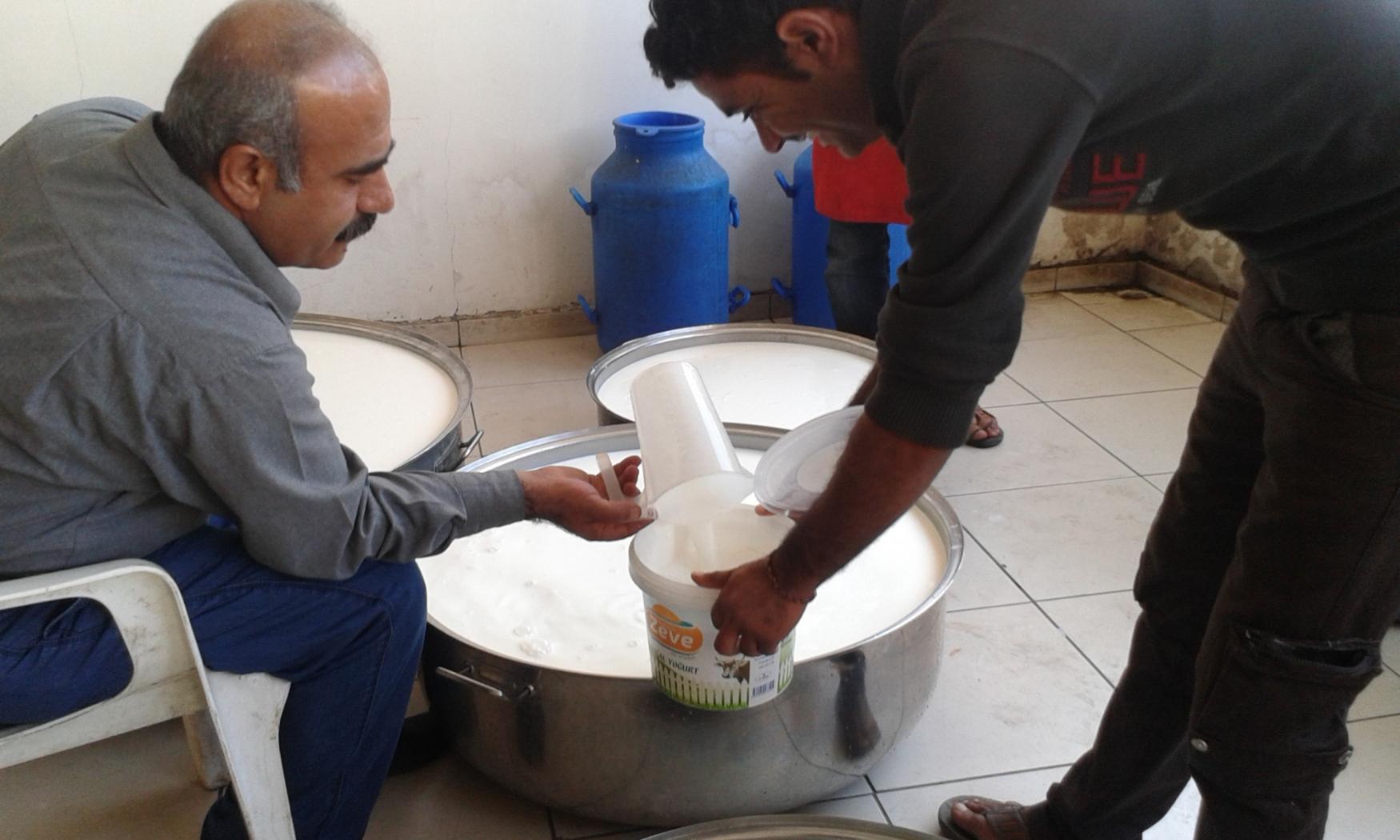 Distributing Milk