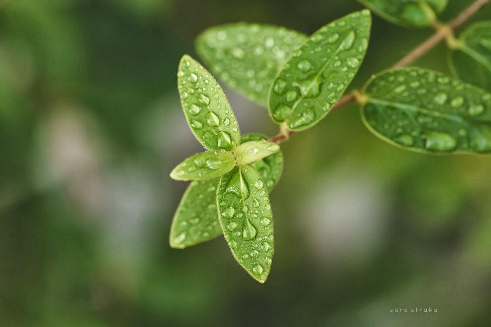 Fall+Garden+websharp-7857.jpg