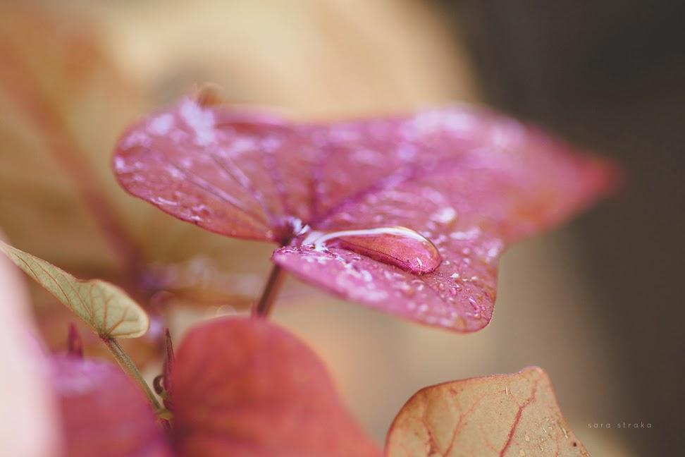 Fall+Garden+websharp-7826.jpg