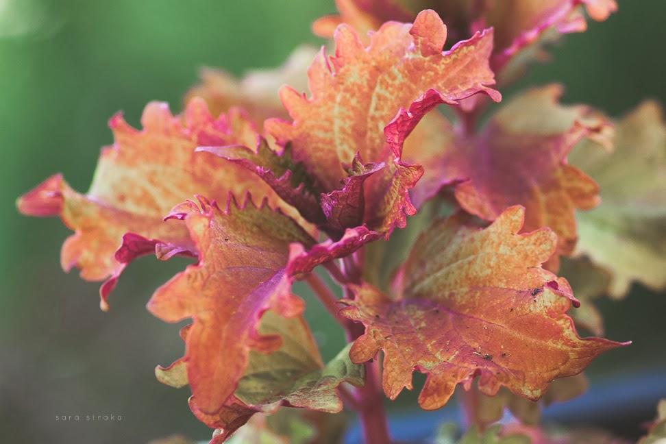 Fall+Garden+websharp-7765.jpg
