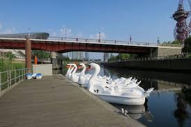 water sports swan pedalo