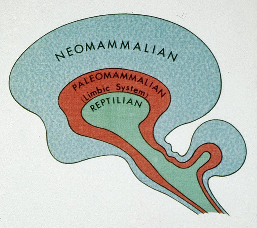 reptillian brain