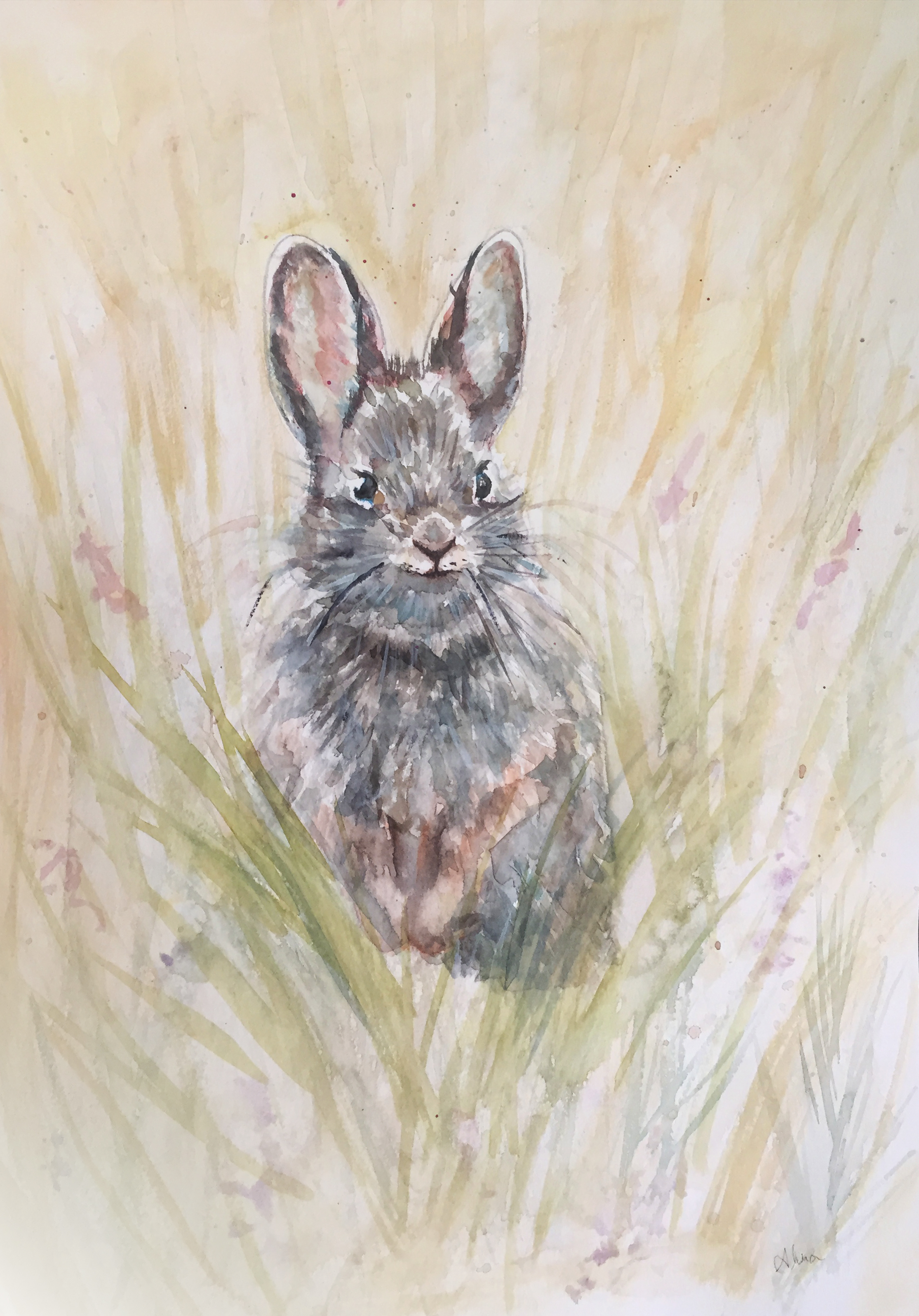 RABBIT (Pygmy Rabbit)