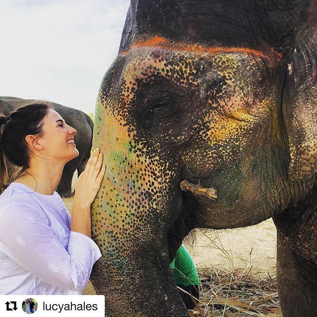 Thanks Lucy for giving all your love to our girl 🙏🏻❤#Repost @lucyahales with @repostapp ・・・ In love with my new friend 😍🐘 rescued by @elefantasticin . Non stop sugar cane munching, she has a sweeter tooth than me! #elephantsaremyfavorite #jaipur #honeymoon