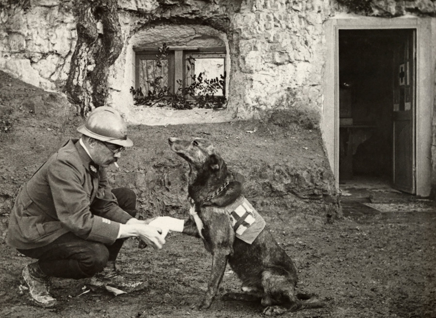 Medic Officer and Medic Dog in WWI