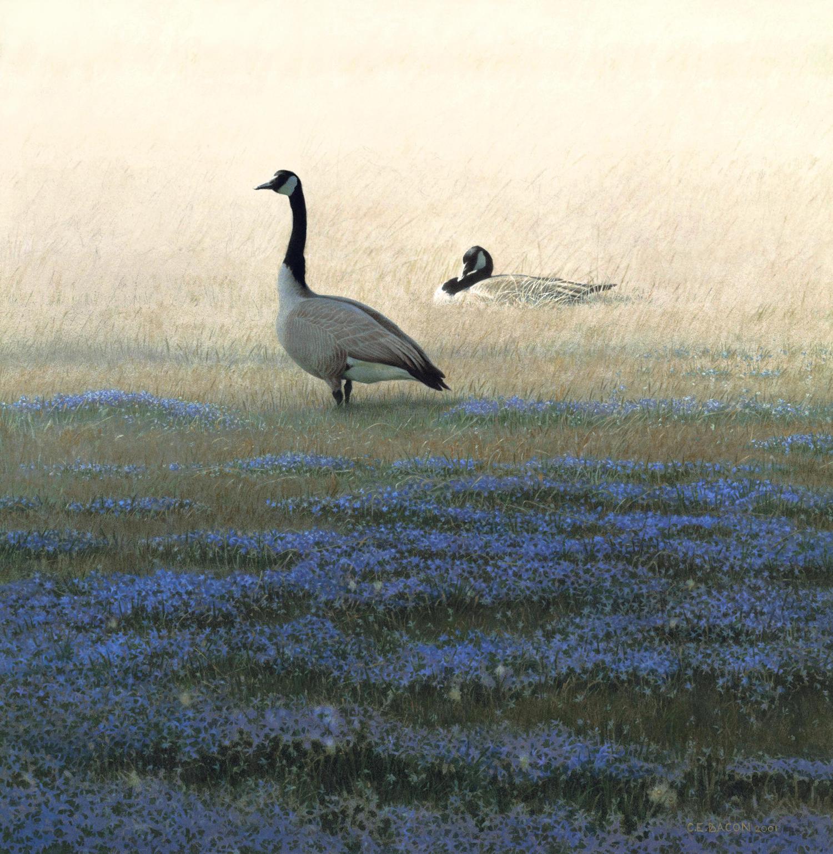 Wild Geese in Blue-eyed Grass