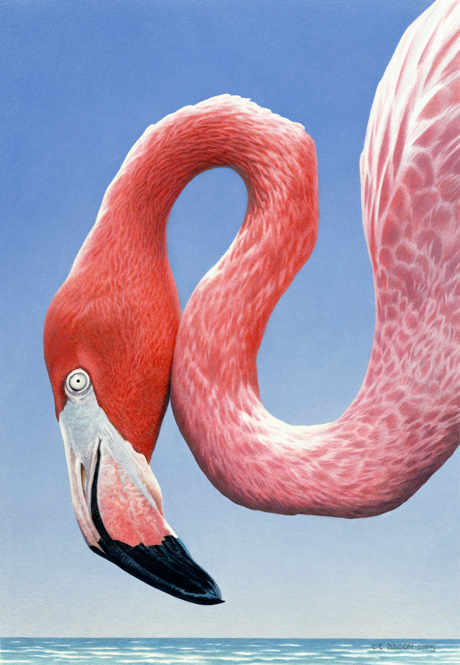 Study-for-Greater-Flamingo-for-new-site.jpg