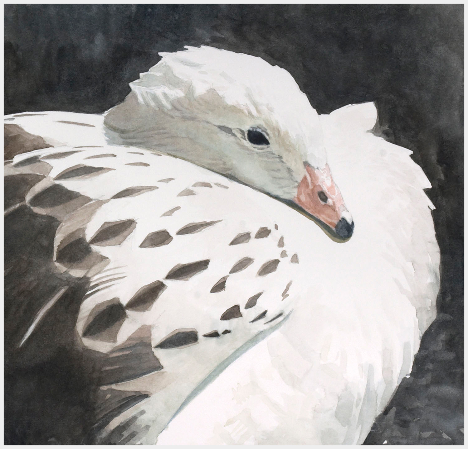 Study-for-Andean-Goose-CROPPED.jpg