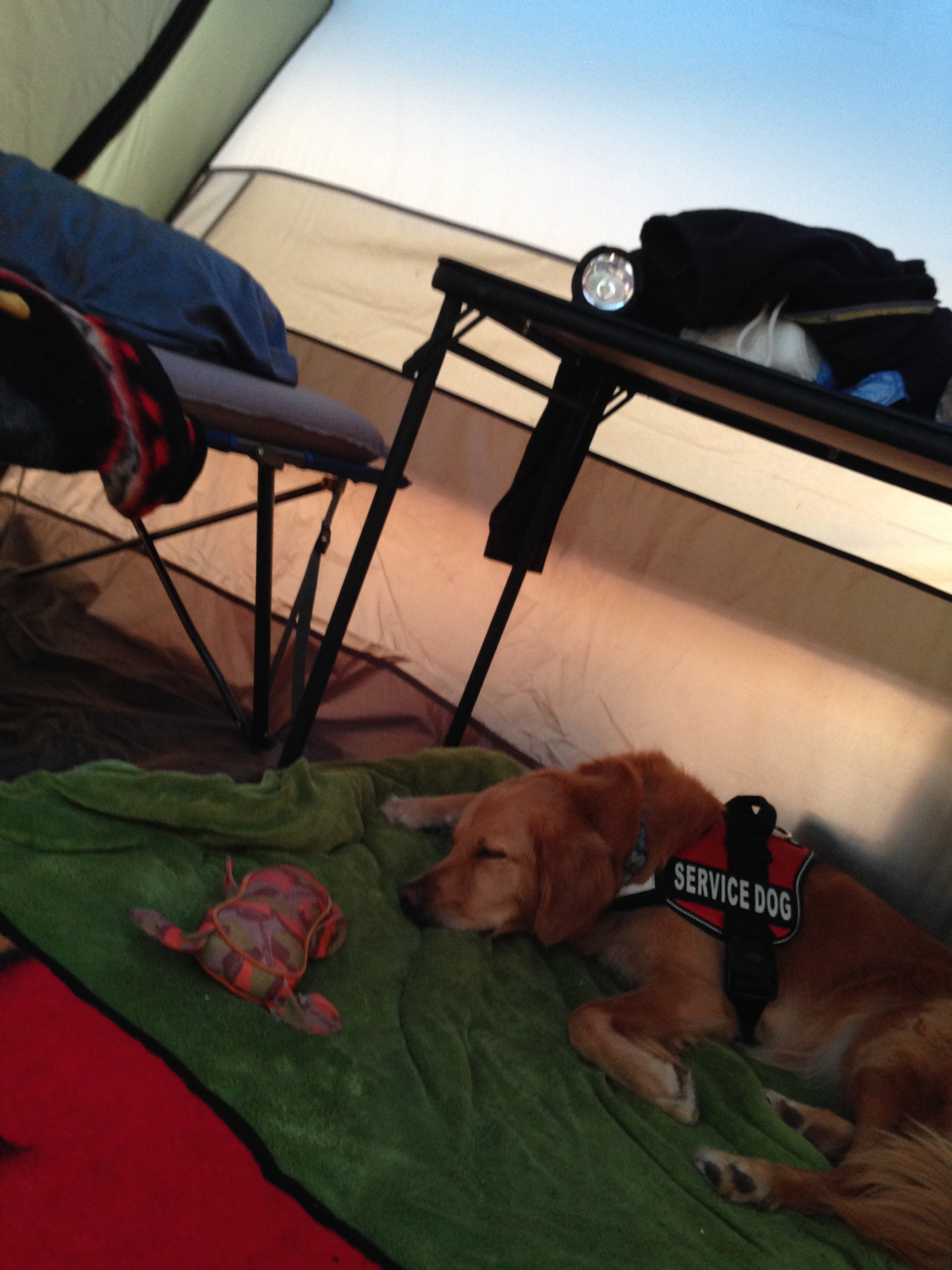Inside of the BaseCamp6.  I have my dogs bed, my cot, luggage, spearfishing gear, surfing gear, and back packing/ascent gear.   And my dogs stuffed animal.