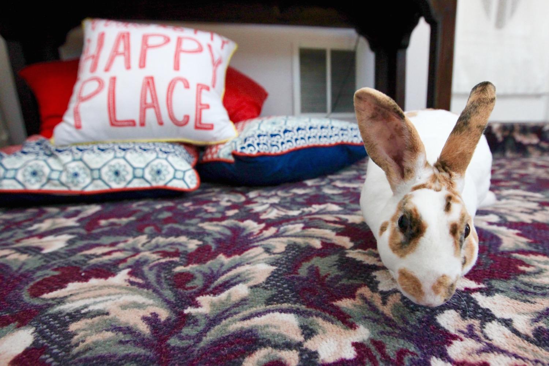 benson bunny.jpg