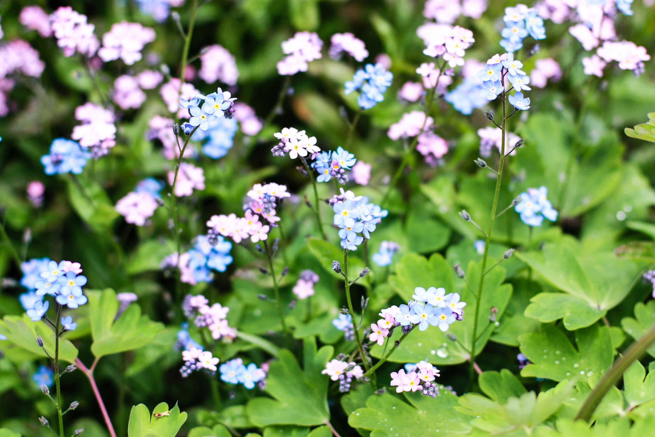Kilcoan Gardens-17.jpg