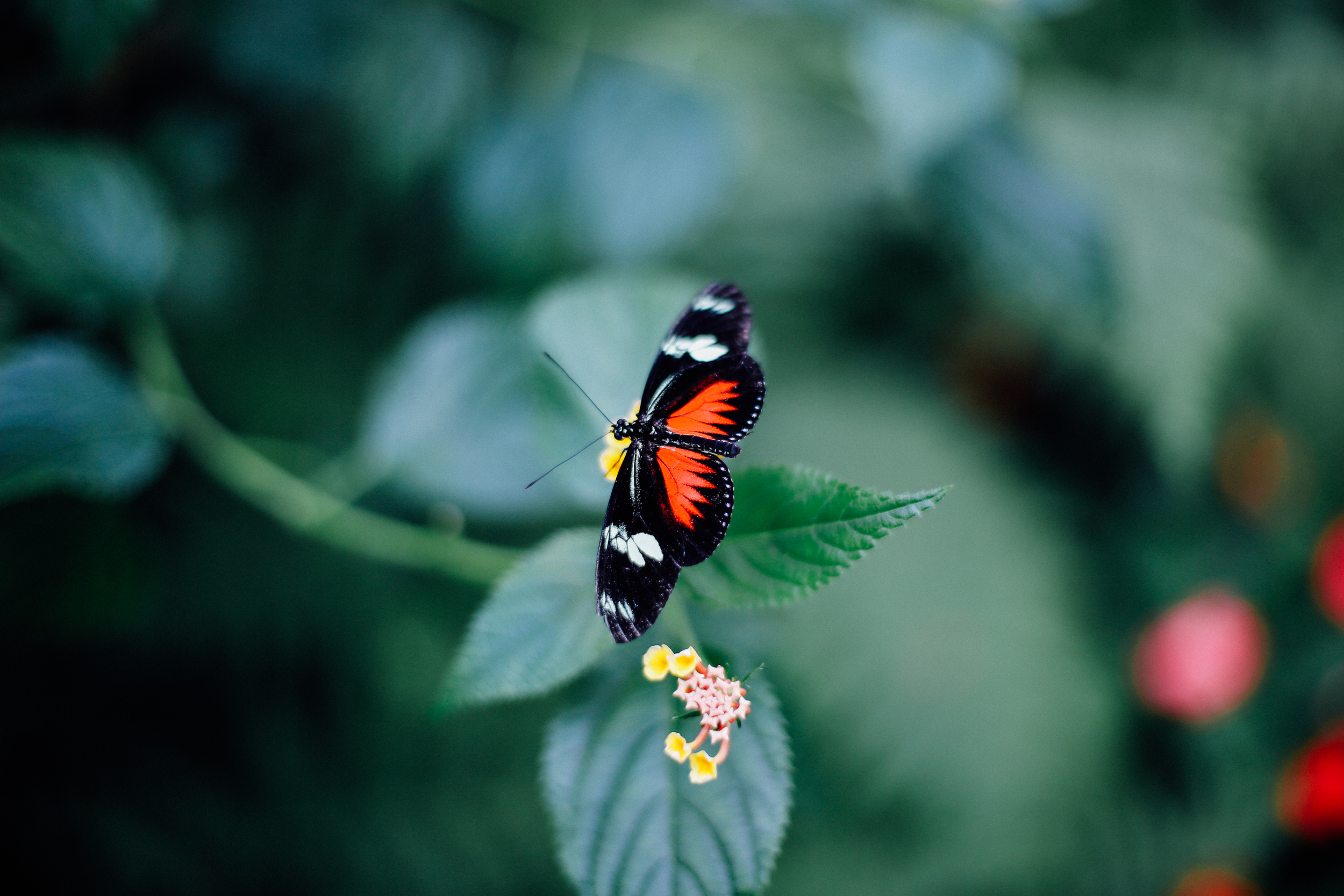 Butterfly Farm Completed-12.jpg