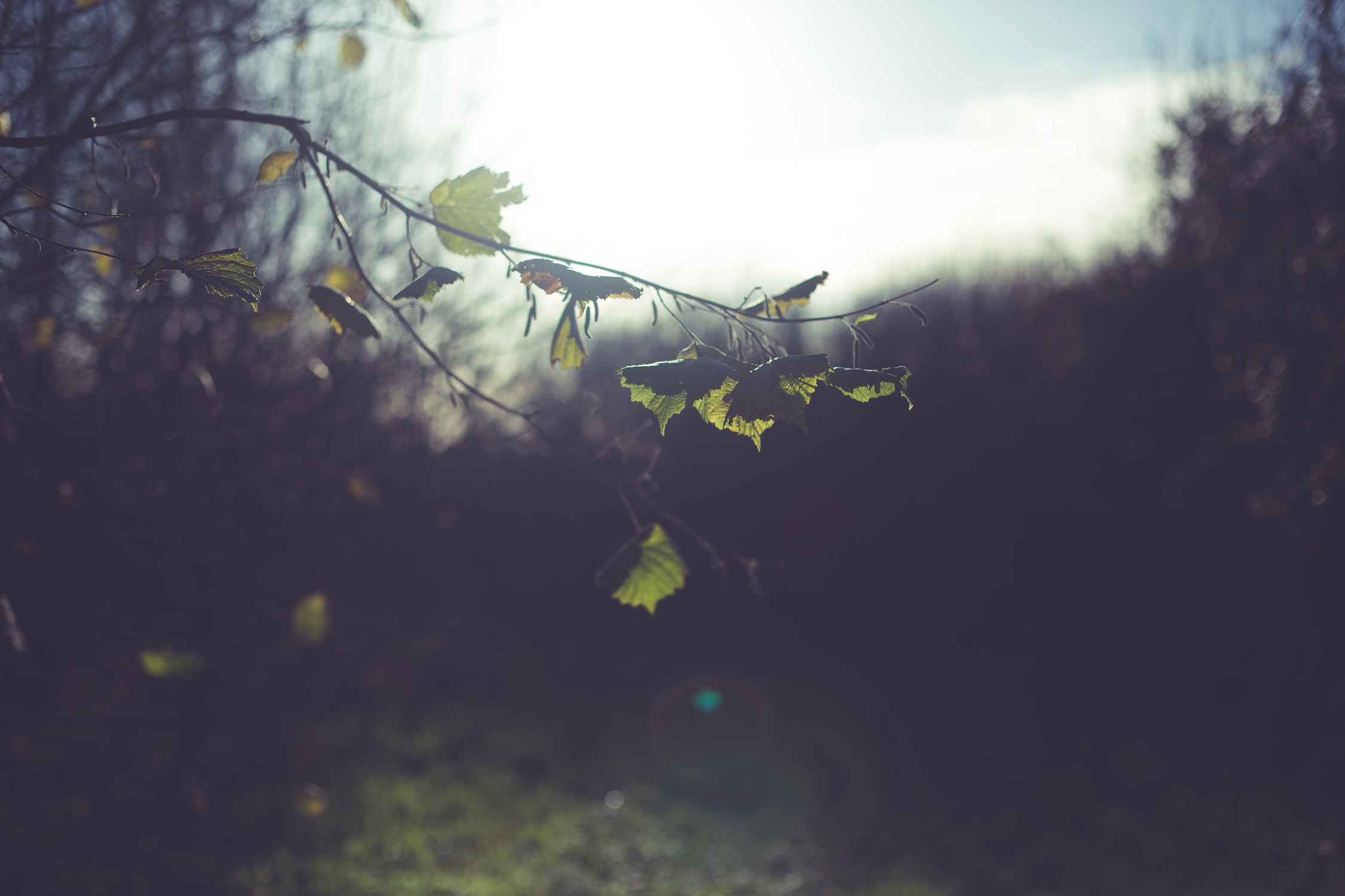 Wreath foraging-2.jpg