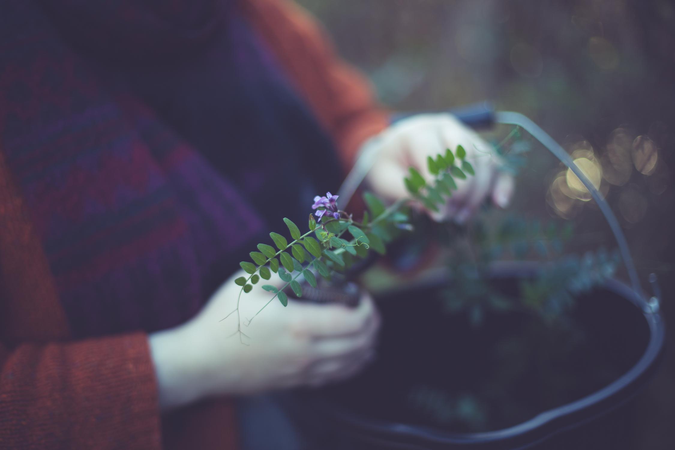 Wreath foraging-3.jpg