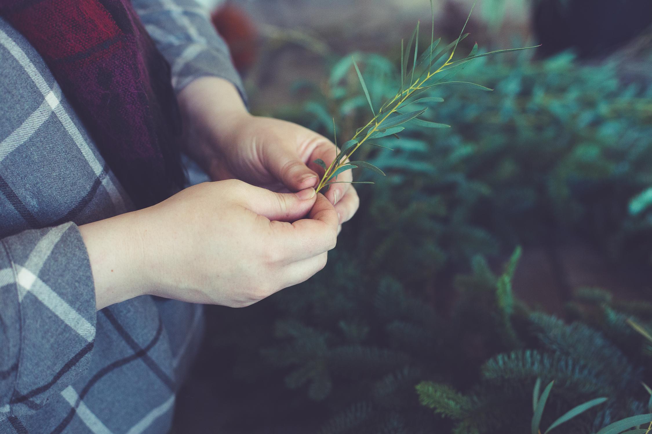Wreath foraging-9.jpg