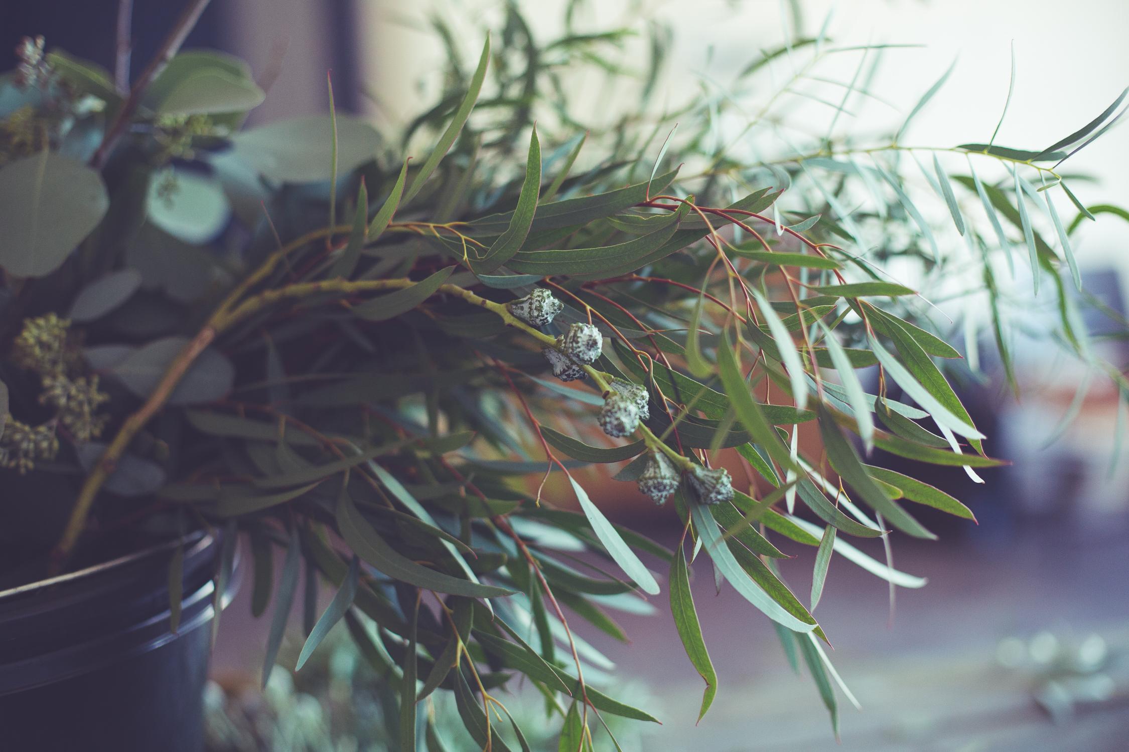 Wreath foraging-10.jpg