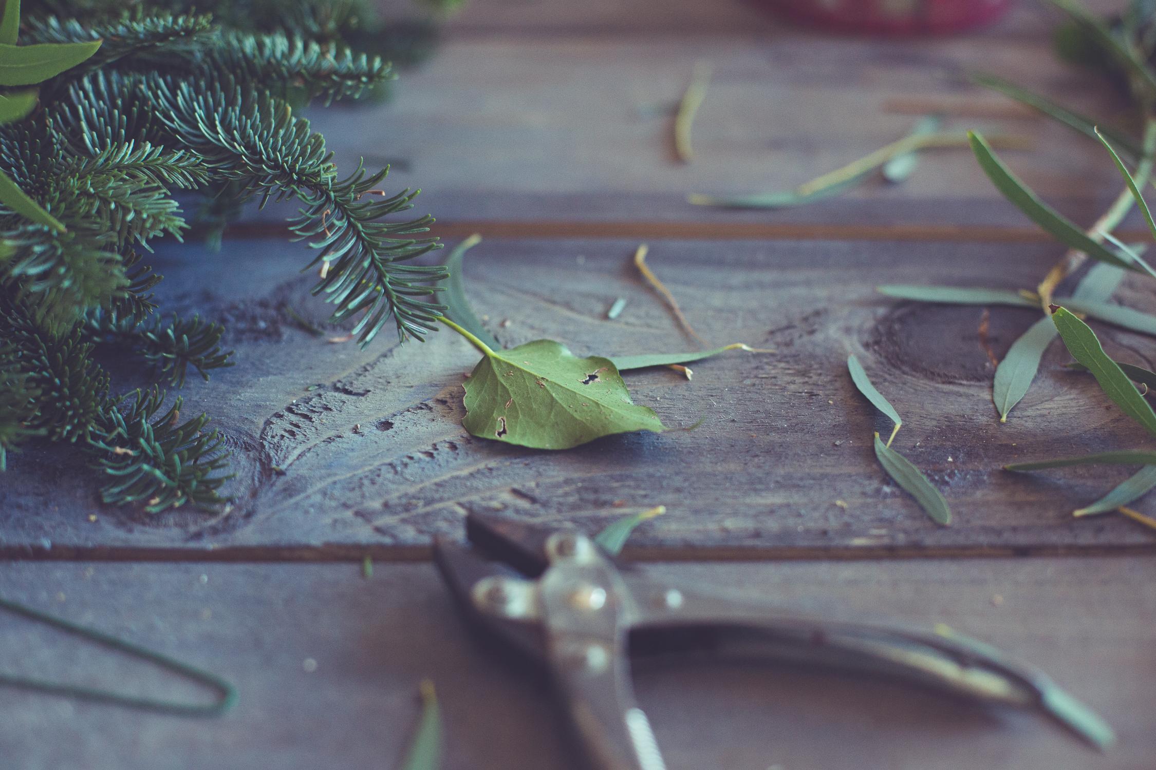 Wreath foraging-15.jpg