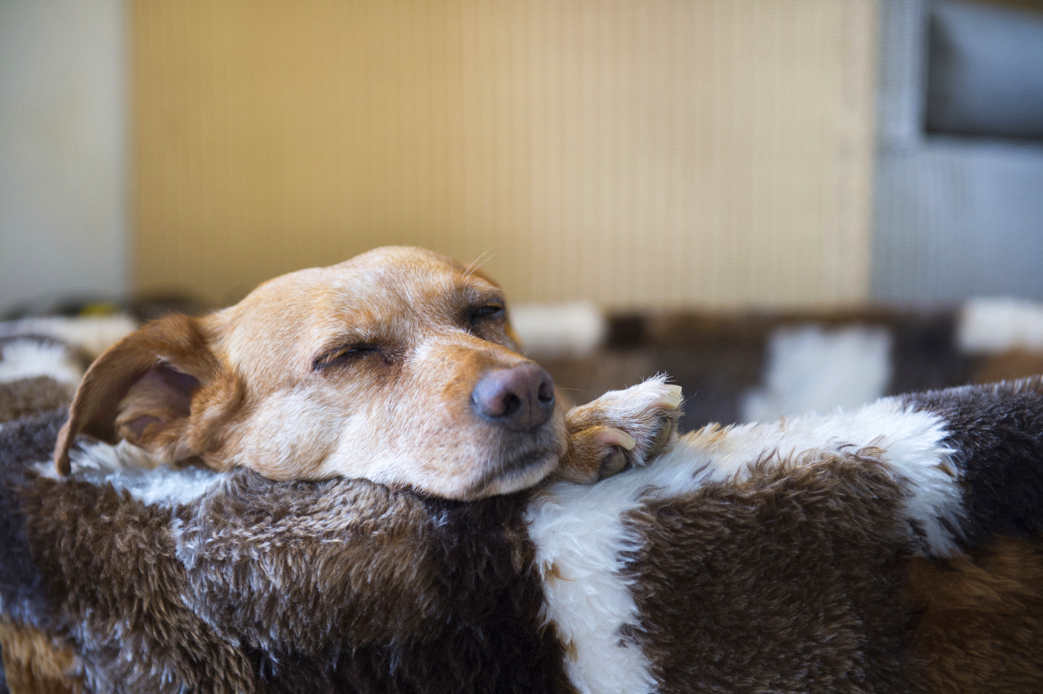 Photo by IvonneW/iStock / Getty Images