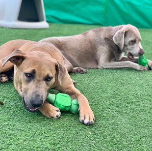 Pet Boarding Simi Valley CA