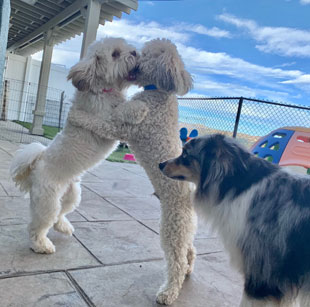 Dog Daycare Simi Valley CA